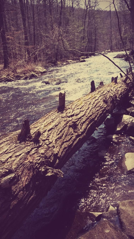 Along Stream